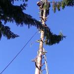 Postupné seřezávání stromu